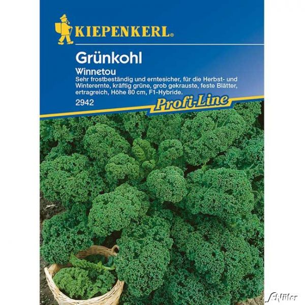 Grünkohl 'Winnetou' Brassica oleracea var. sabellica Bild