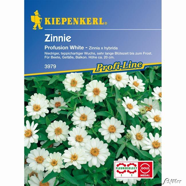Zinnie 'Profusion White'