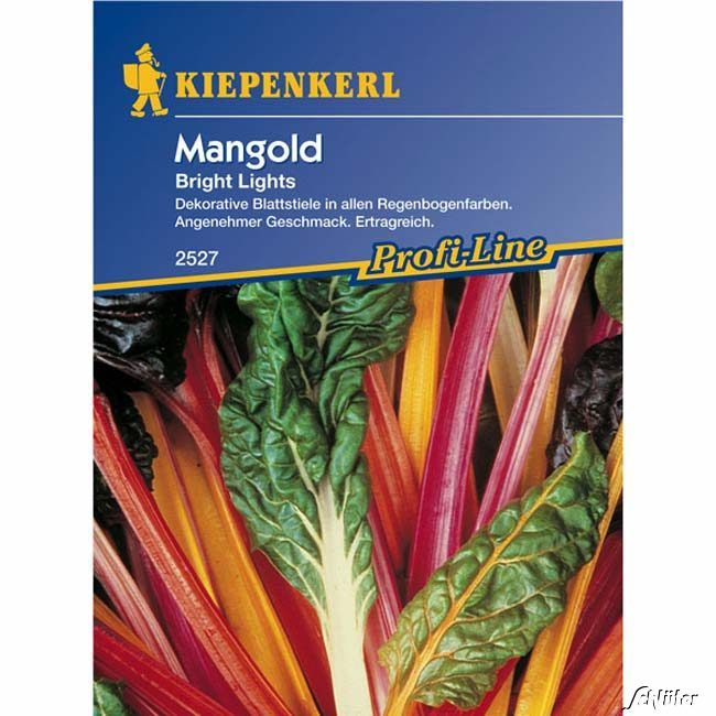 Mangold 'Bright Lights'
