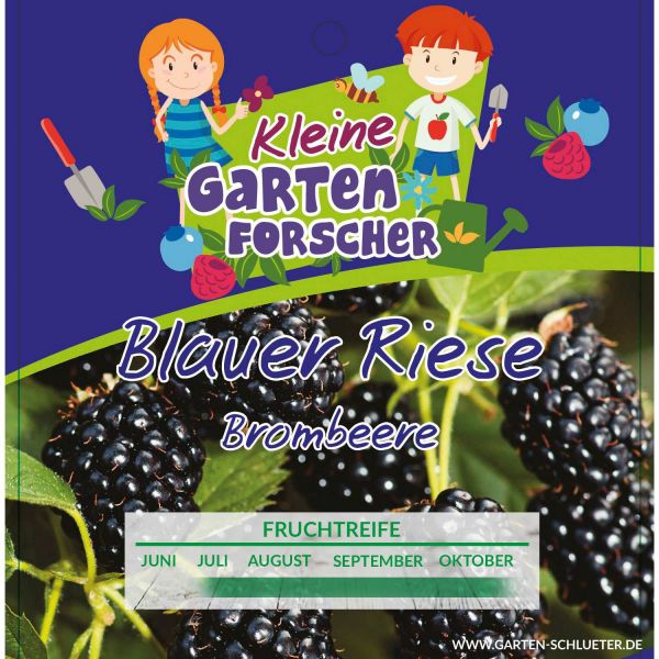 Brombeere 'Blauer Riese' - Kleine Gartenforscher Rubus fruticosus Bild