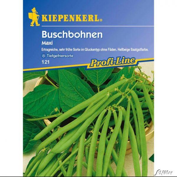 Buschbohne 'Maxi' Phaseolus vulgaris var. nanus Bild