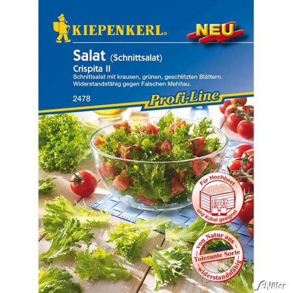 Salat 'Crispita II' - Schnittsalat Lactuca sativa 'Crispita' Bild