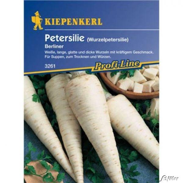 Petersilie / Wurzelpetersilie Berliner Petroselinum crispum subspezies Bild