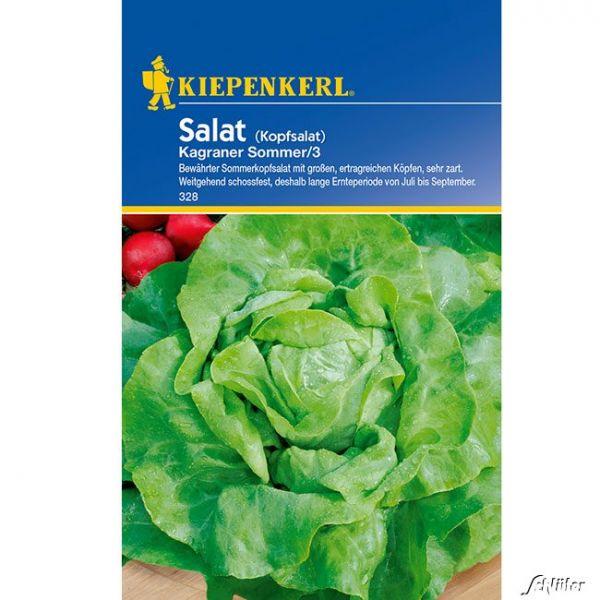 Kopfsalat 'Kagraner Sommer/3' Lactuca sativa var. capitata Bild