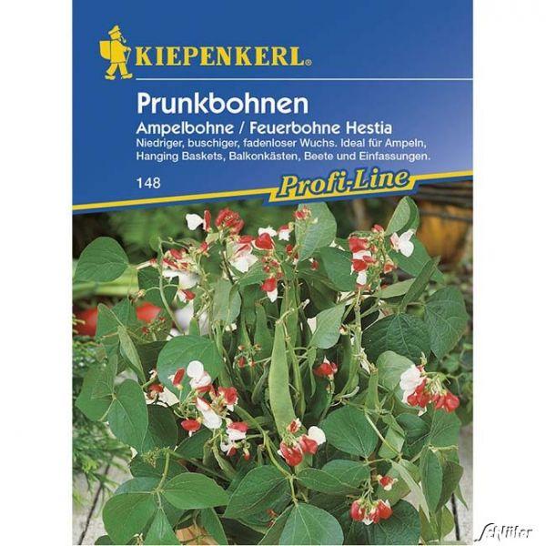 Buschbohne 'Hestia' - Prunkbohne, Ampelbohne Phaseolus coccineus Bild