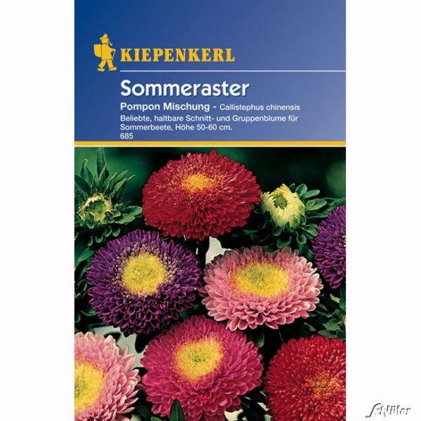 Sommeraster 'Pompon-Mischung' Callistephus chinensis Bild