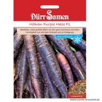 schwarze urm hre 39 purple haze 39 daucus carota ssp sativus m hren garten schl ter. Black Bedroom Furniture Sets. Home Design Ideas