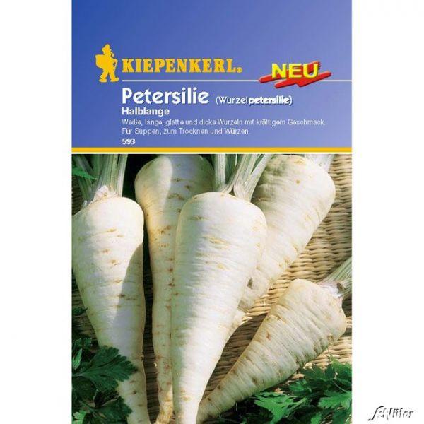 Wurzelpetersilie 'Halblange' Petroselinum crispum subspezies tuberosum Bild
