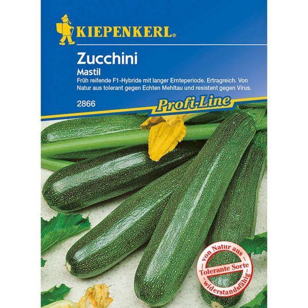 Zucchini 'Mastil' Cucurbita pepo 'Mastil' Bild