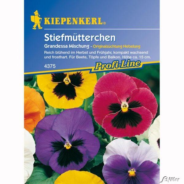 Stiefmütterchen 'Grandessa Mischung' Viola x wittrockiana Bild