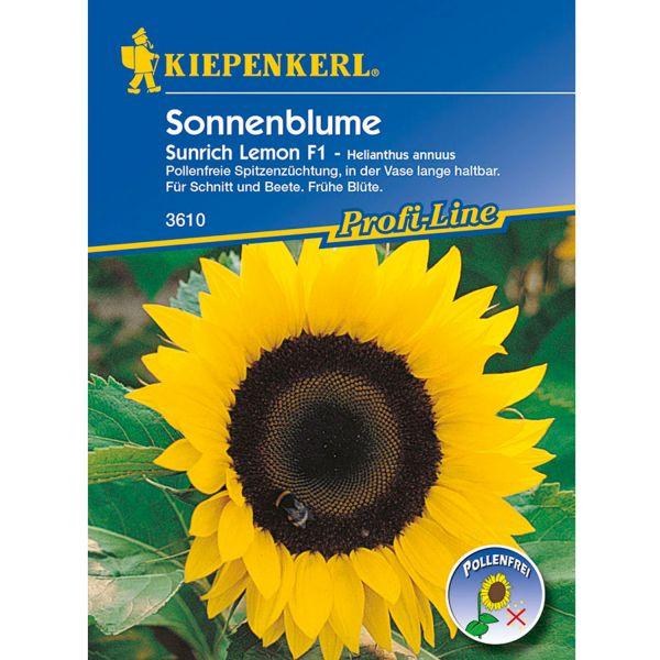 Sonnenblume 'Sunrich Lemon' Helianthus annuus Bild
