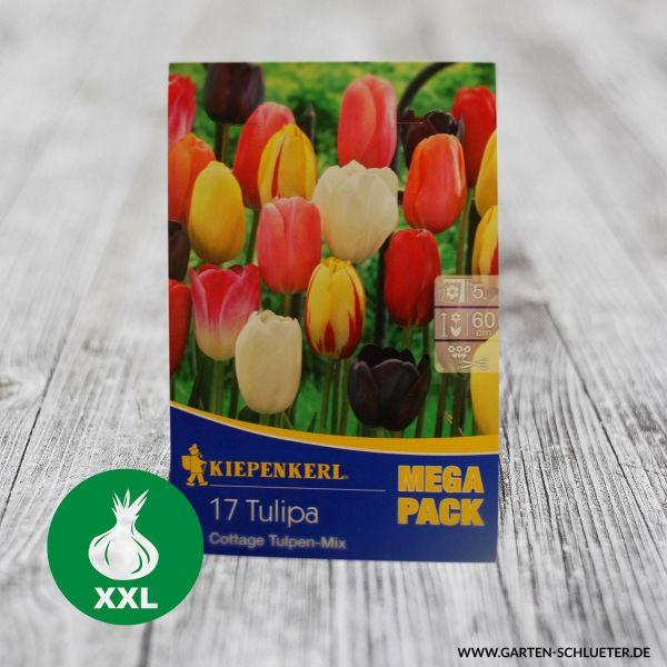 Einfache späte Tulpe 'Cottage- Mischung' - 17 Stück Tulipa 'Cottage Mix' Bild