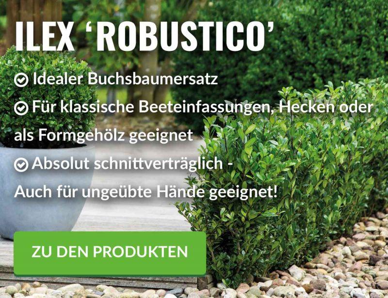 Pflanzenversand Gartenpflanzen Online Kaufen Garten Schluter