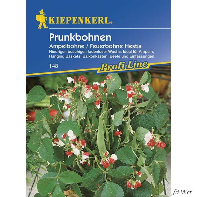 Buschbohne 'Hestia' - Prunkbohne, Ampelbohne