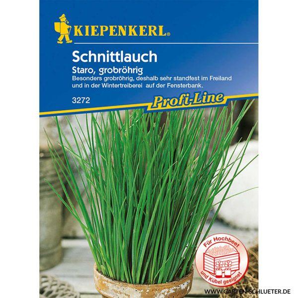 Schnittlauch 'Staro' - grobröhrig Allium schoenoprasum Bild