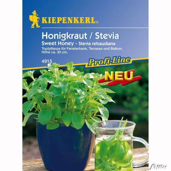 Stevia/Honigkraut 'Sweet Honey' Stevia rebaudiana Bild