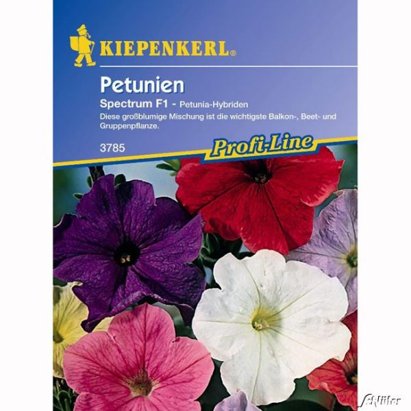 Petunien (stehend) 'Spectrum' Petunia-Hybriden Bild