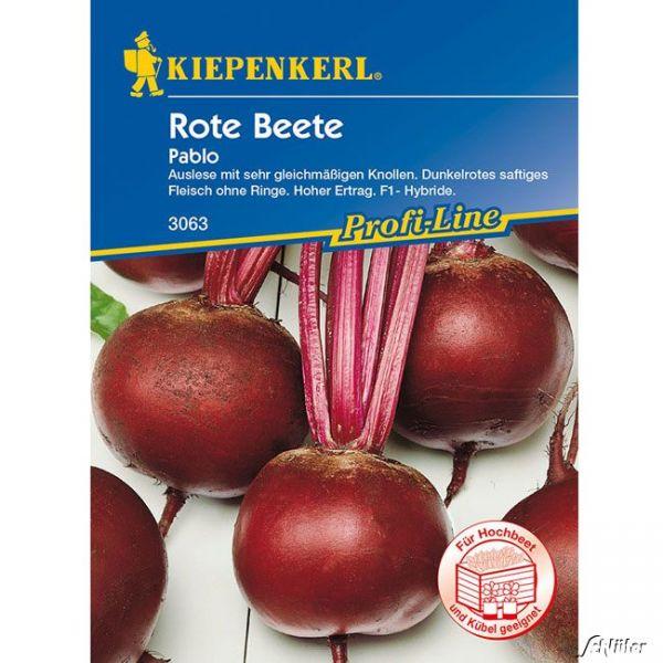 Rote Beete 'Pablo' Beta vulgaris var. vulgaris Bild