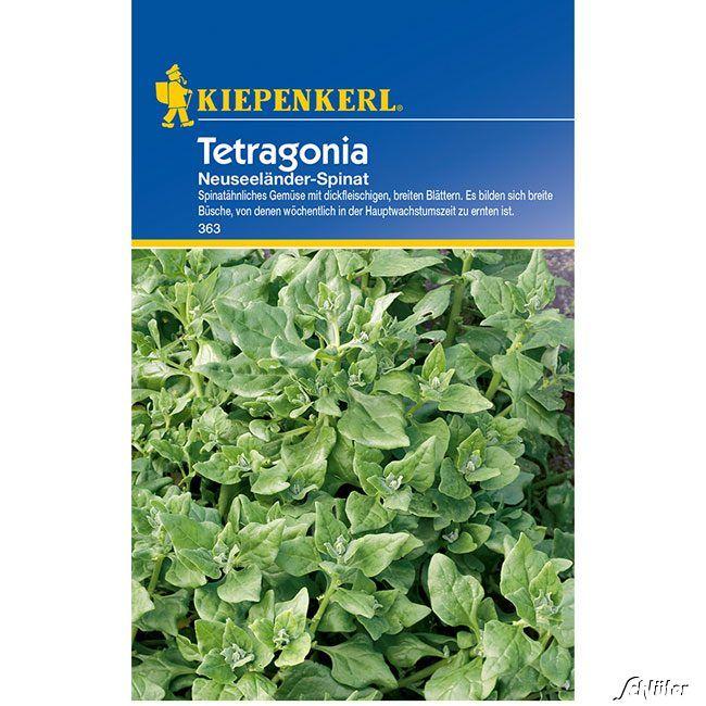 Neuseeländer Spinat 'Tetragonia'