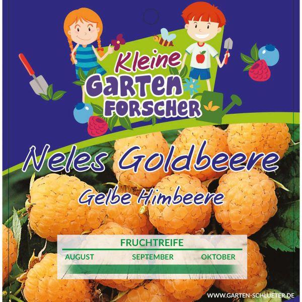 Gelbe Himbeere 'Nele´s Goldbeere' Kleine Gartenforscher Rubus idaeus Bild