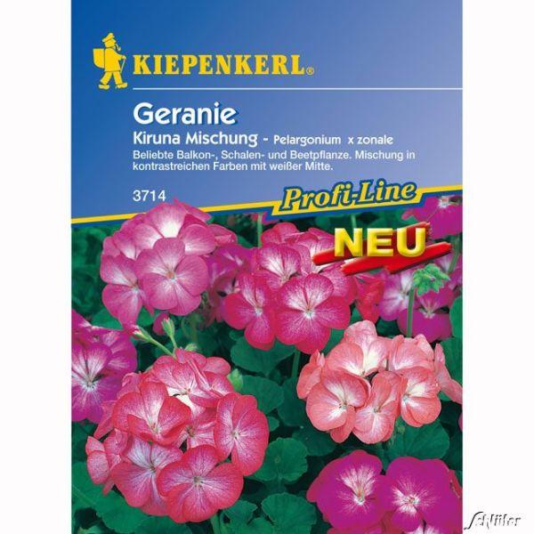 Geranie 'Kiruna Mischung' Pelargonium x zonale Bild