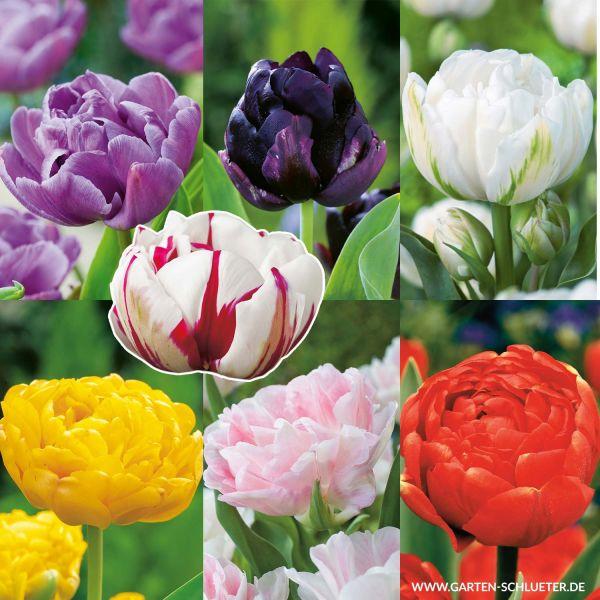 Gefüllte späte Tulpe 'Sortiment in 7 Sorten' - 47 Stück Tulipa Mix Bild