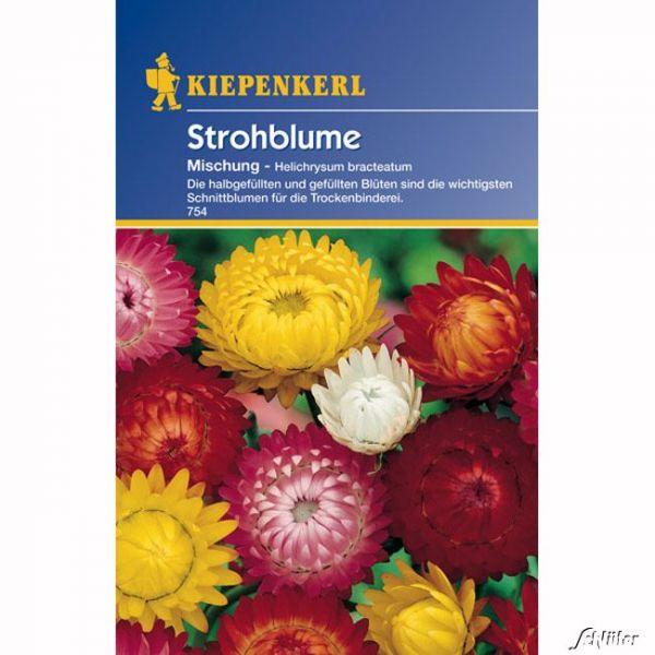 Strohblumen-Mischung Helichrysum bracteatum Bild