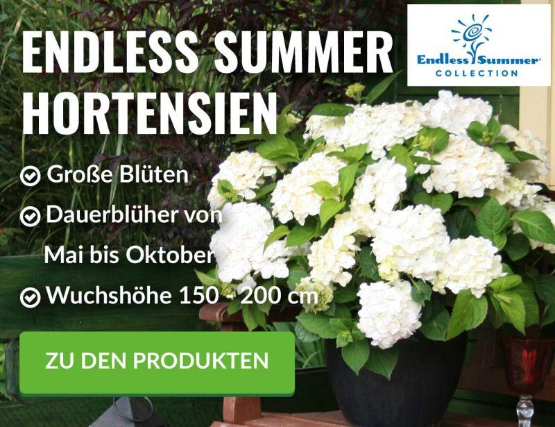 Pflanzenversand Gartenpflanzen Online Kaufen Garten Schlüter