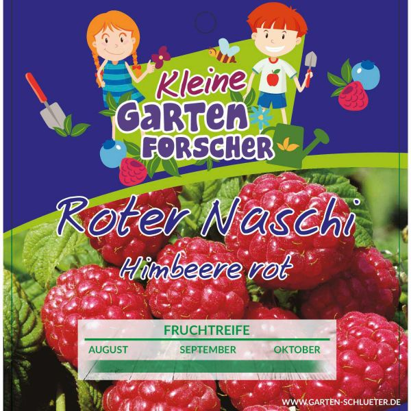 Rote Himbeere 'Roter Naschi' Kleine Gartenforscher Rubus idaeus Bild
