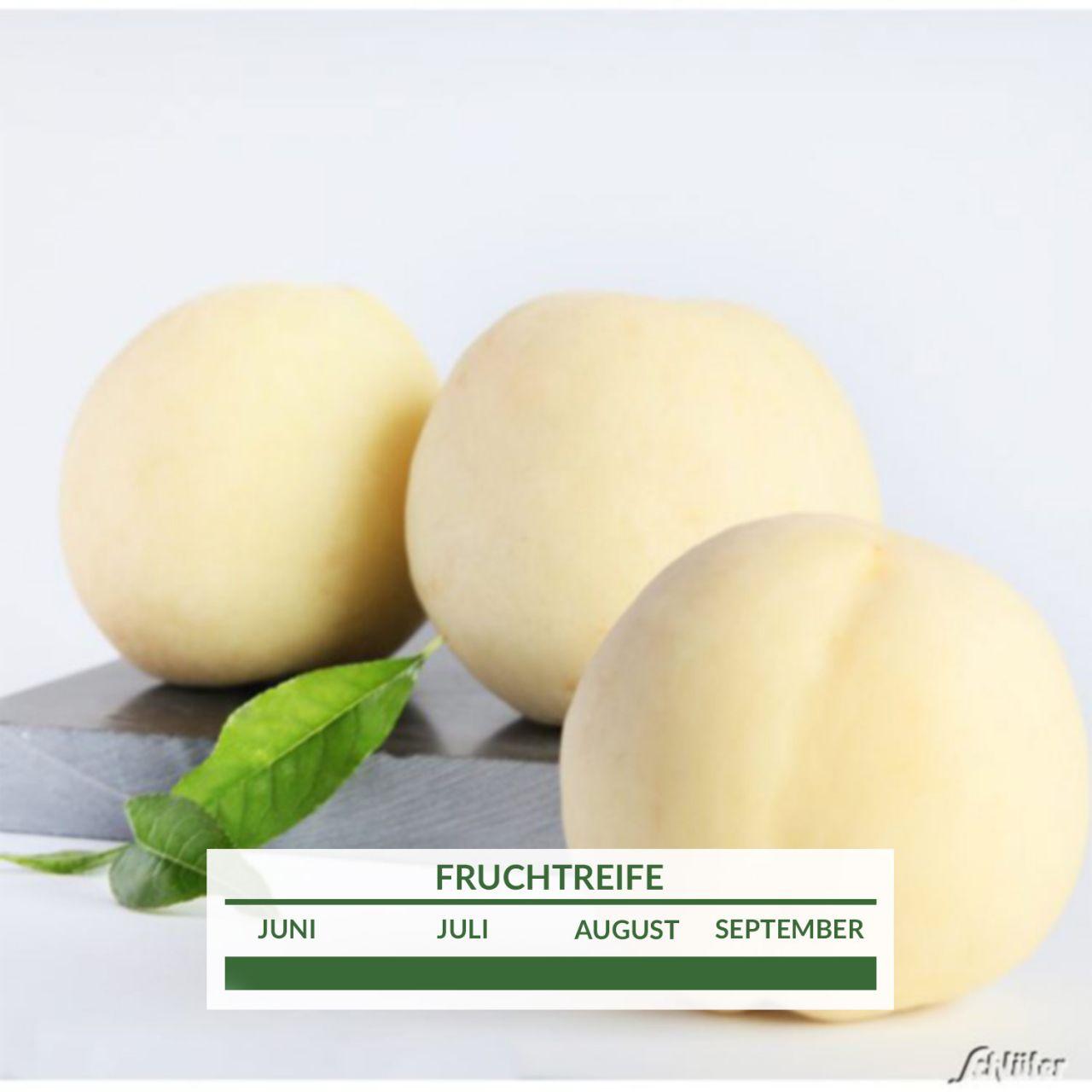 Weisser Pfirsich Icepeach