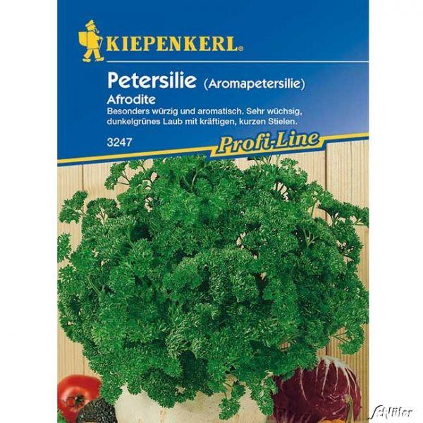 Petersilie (Aromapetersilie) 'Afrodite' Petroselinum crispum Bild