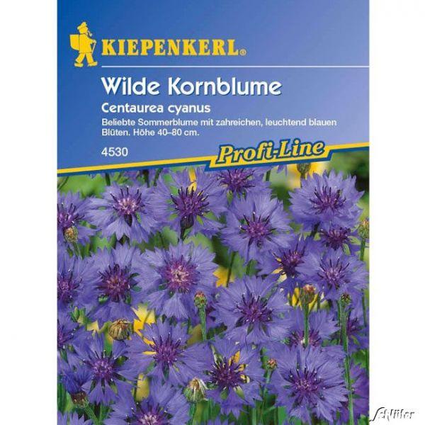 Kornblume Centaurea cyanus Bild