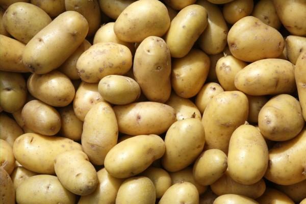 Kartoffelsorten-1024x683