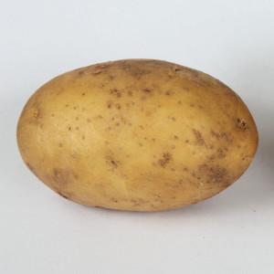 Kartoffel_Linda-300x300