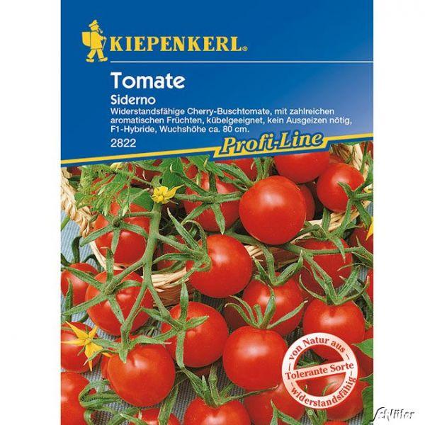 Cherry-Busch-Tomate `Siderno F 1´ Lycopersicon esculentum Bild