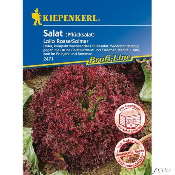 Pflücksalat 'Lollo Rossa/ Solmar' Lactuca sativa var Bild