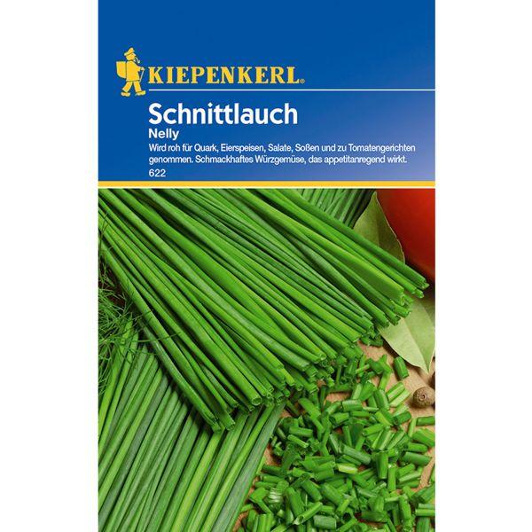 Schnittlauch 'Nelly' Allium schoenoprasum Bild