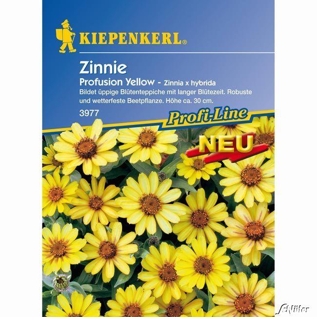 Zinnie 'Profusion Yellow'