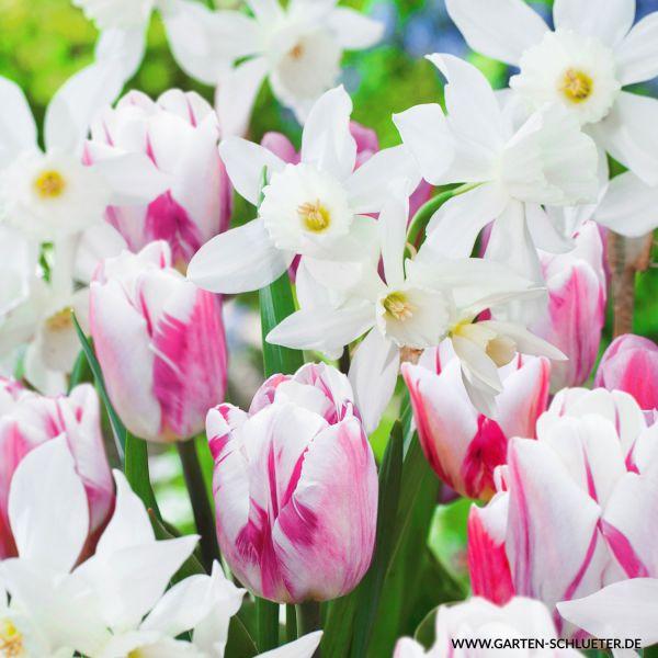 Tulpen & Narzissen Mischung 'Folk Story' - 15 Stück Tulipa & Narcissus 'Folk Story' Bild