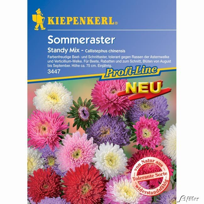 Sommeraster 'Standy Mix'