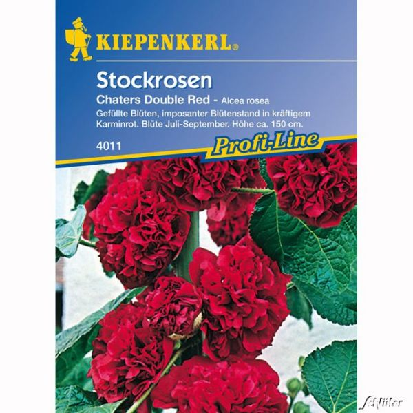 Stockrosen 'Chaters Double Red' Alcea rosea Bild
