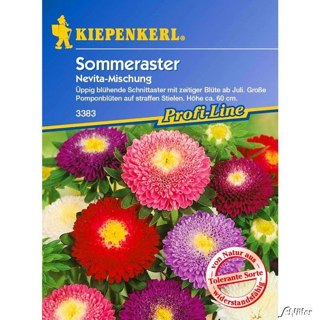 Garten-Schlueter.de: Sommeraster Nevita - Mischung