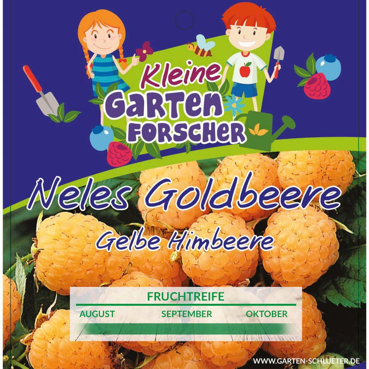 Gelbe Himbeere 'Nele´s Goldbeere' Kleine Gartenforscher