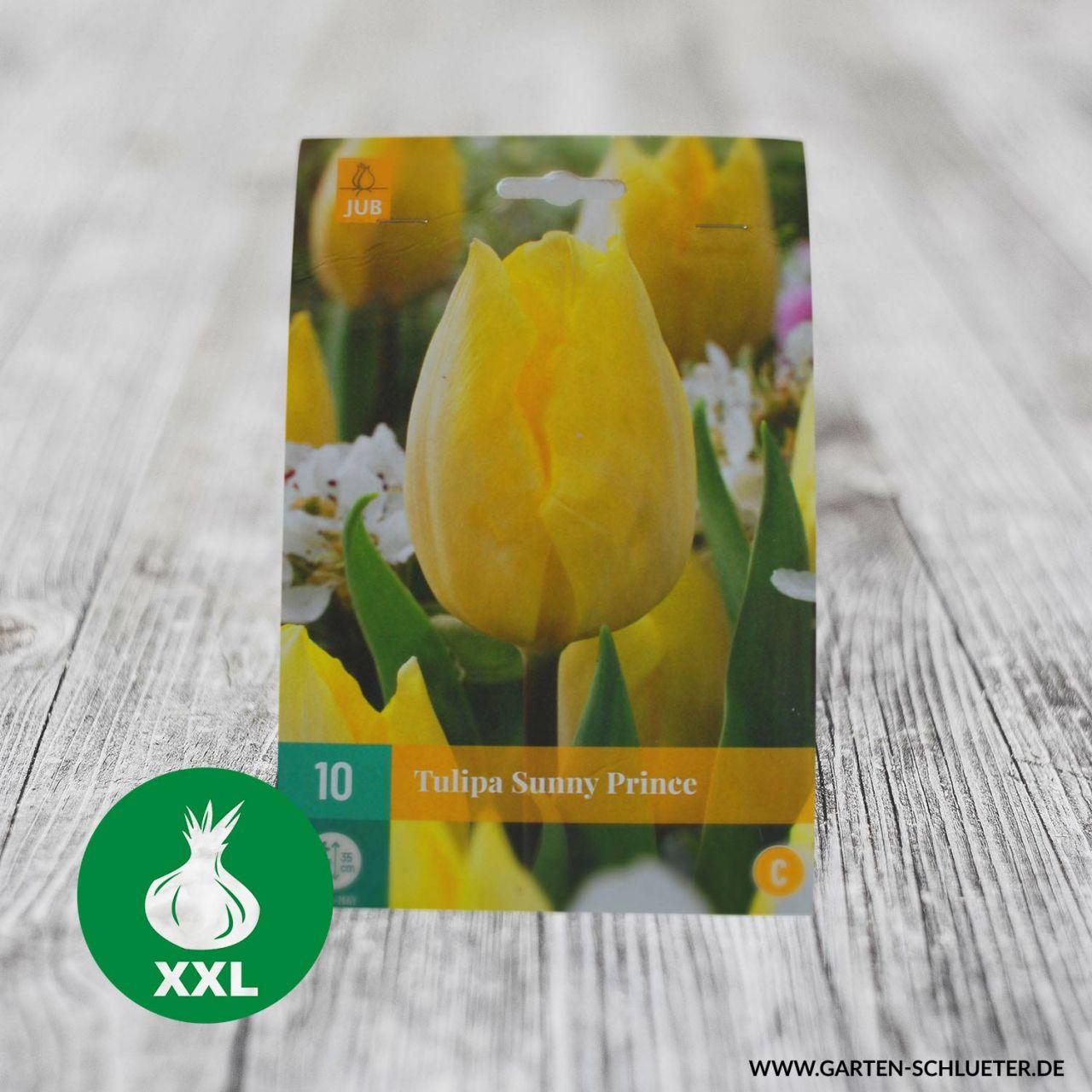 Garten-Schlueter.de: Einfache frühe Tulpe Sunny Prince - 10 Stück
