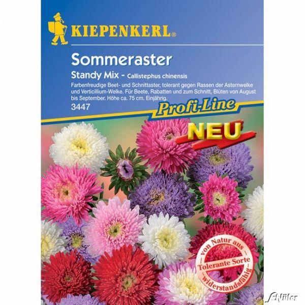 Sommeraster 'Standy Mix' Callistephus chinensis Bild