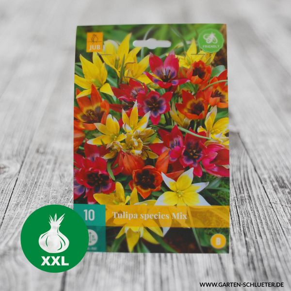 Wildtulpen 'Mischung' - 10 Stück Tulipa Bild