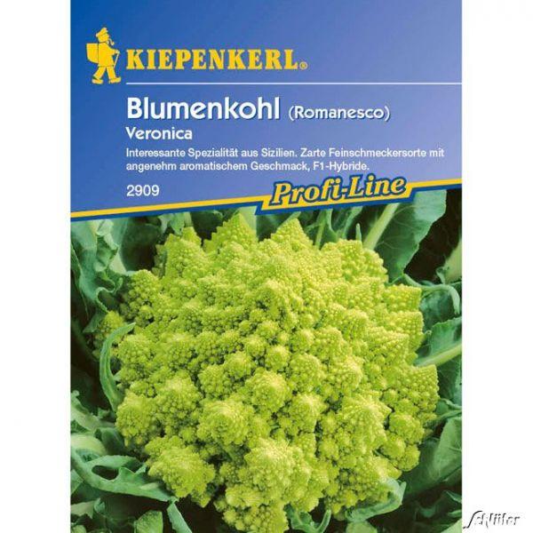 Grüner Blumenkohl 'Veronica' (Romanesco) Brassica oleracea var. botrytis Bild