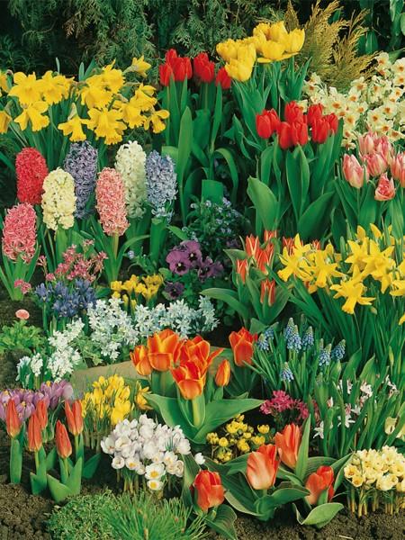 Blumenzwiebel-Blumenzwiebelmischung