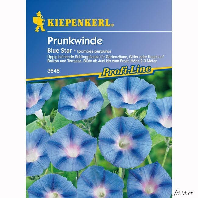 Winde (Prunkwinde) 'Blue Star'