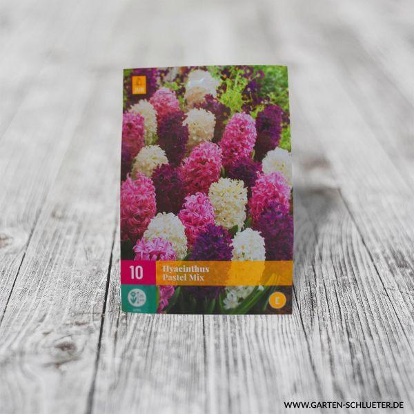 Hyazinthen Mischung 'Pastel Mix' - 10 Stück Hyacinthus orientalis Bild